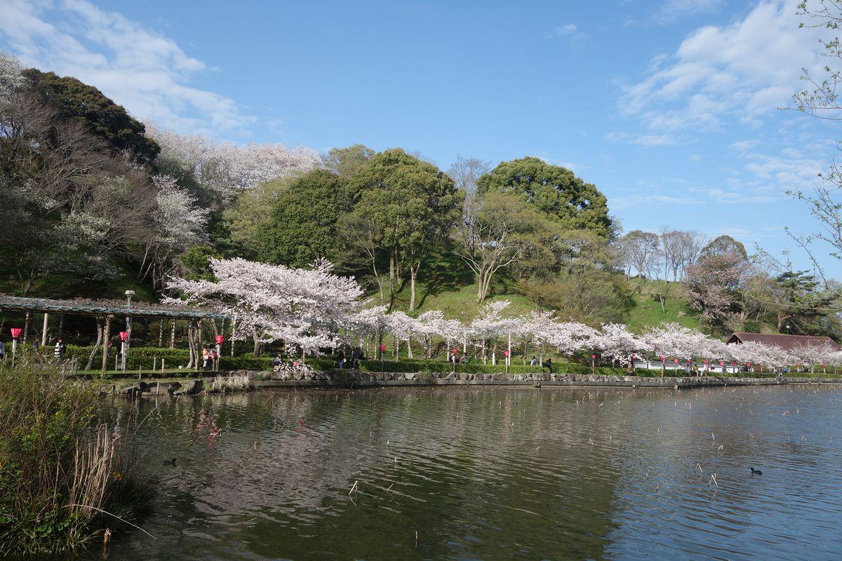 蓮花寺公園10