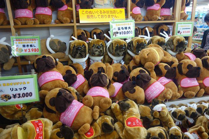 高知闘犬3