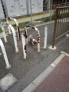 自転車は通れません。ジョリも通れません。クンクン