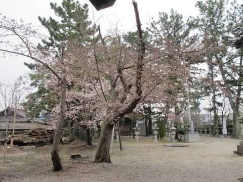 春 H27 023