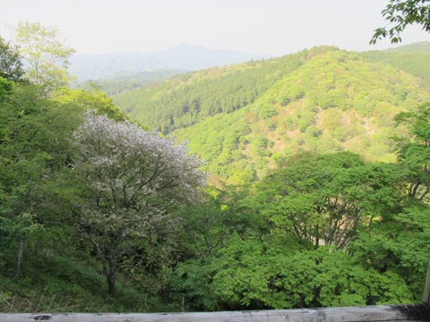 吉野山 237