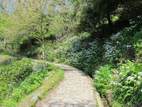 吉野山 142