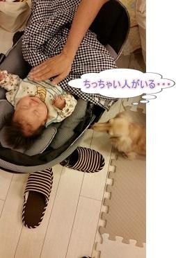 ちゃんこと赤ちゃん