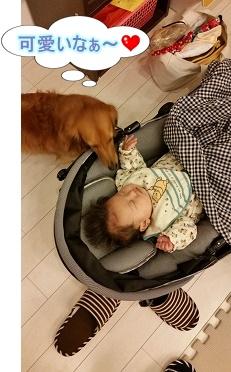 犬太郎と赤ちゃん