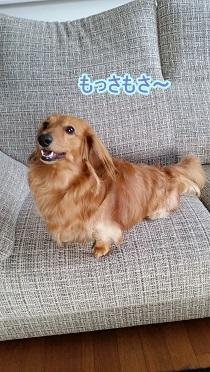 4月の犬太郎