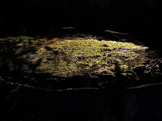 南禅寺の苔20141231