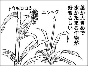 kfc00339-2