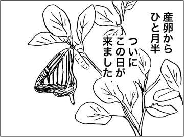 kfc00346-4