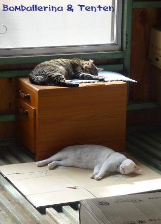 ボン&てん倉庫でお昼寝