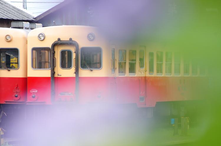 2015年6月21日 小湊 いすみ あじさい 9029