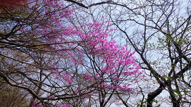 ooyamaDSC_0188.jpg