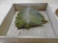 0150317桜餅01