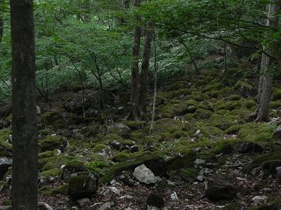 ウノタワへの谷沿いに咲くガクウツギ
