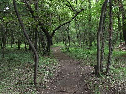 水野の森・整備