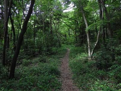 水野の森・未整備