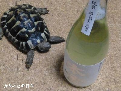 P1220530-sake.jpg
