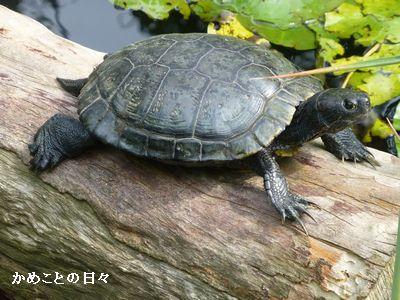 P1220673-kuro.jpg