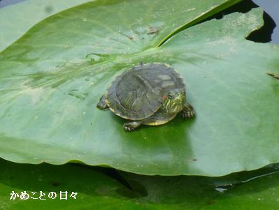 P1220681-midori.jpg