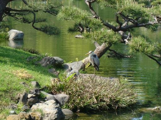 清澄庭園野鳥