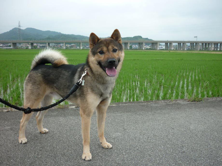 201506北海道犬協会-04
