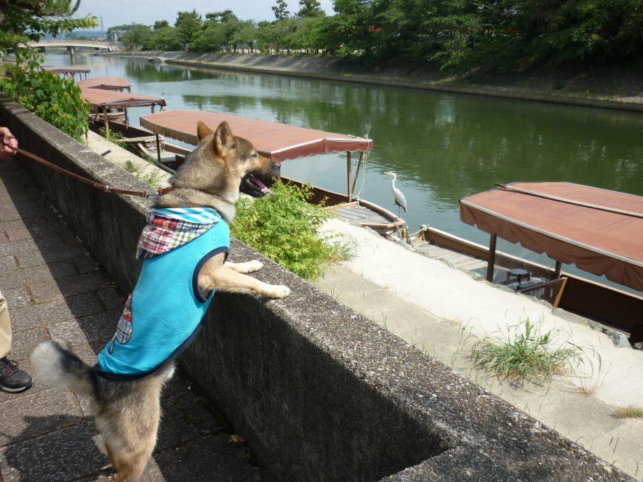 201506亀山宇治名張02-07