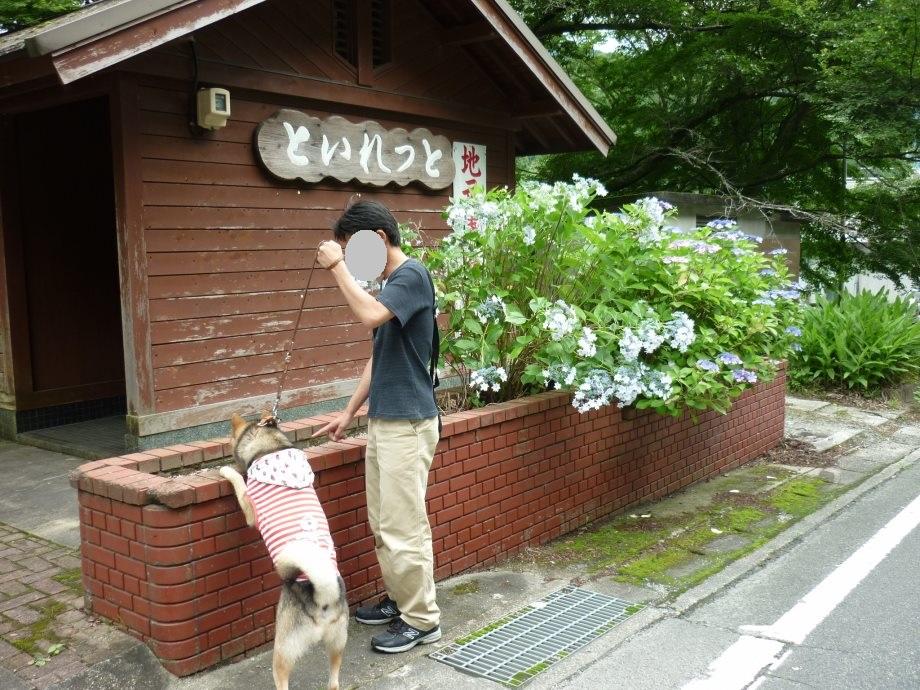 201506君ケ野ダム-05