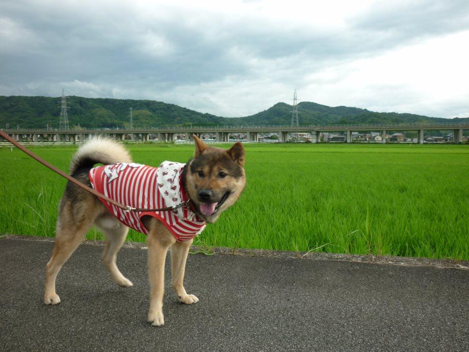 201506お散歩新規開拓-01