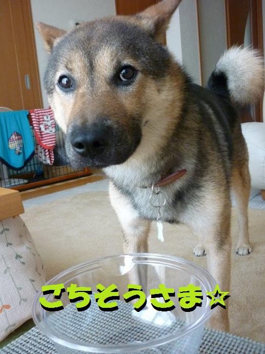 201507お豆腐シーズンとクプレラ-03