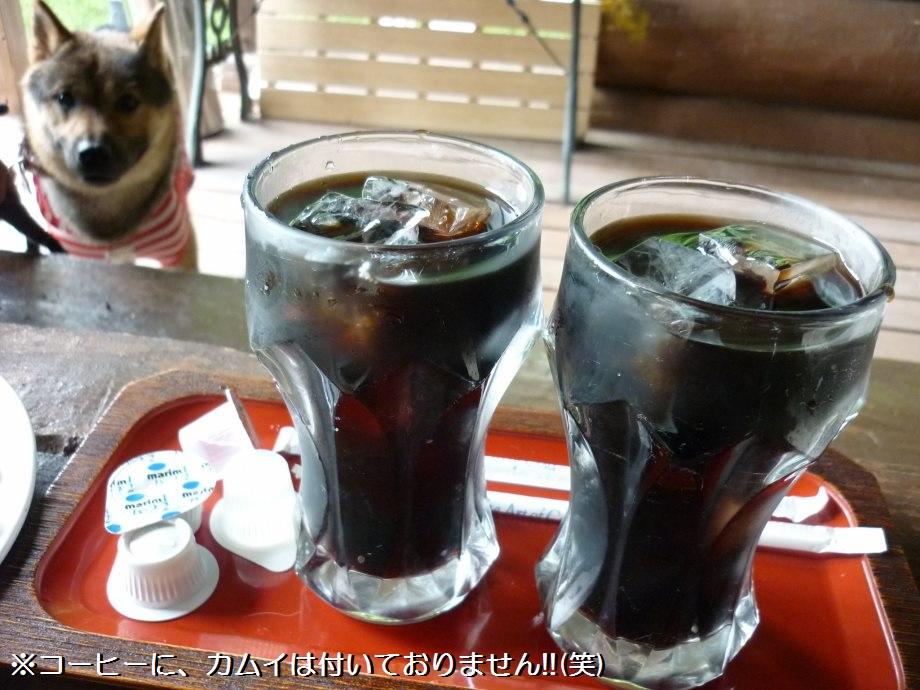 201507ドッグカフェ-06