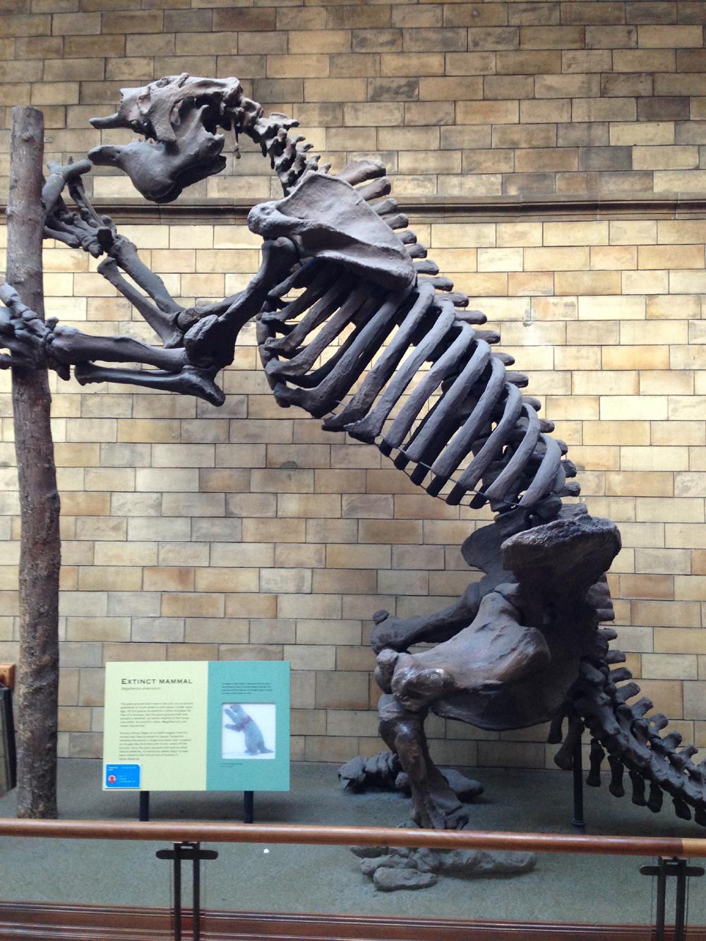 自然史博物館002