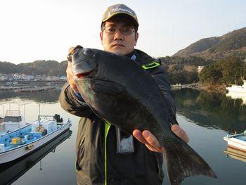 2015 2/11 大西くんグレ37.8cm