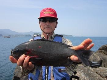 2015 5/10 和田さんグレ39.8cm