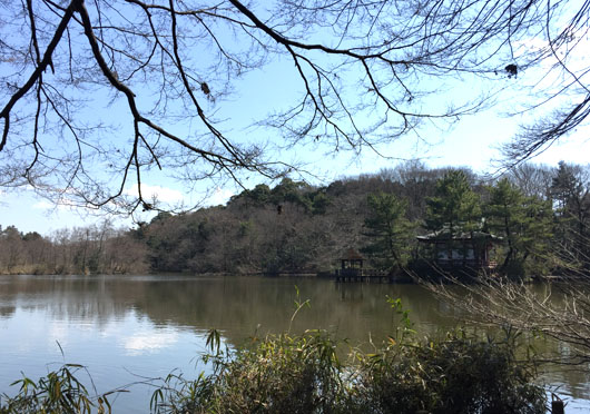 150316_shakujii_itukusima.jpg