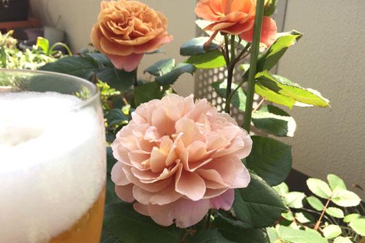 150504_rose.jpg