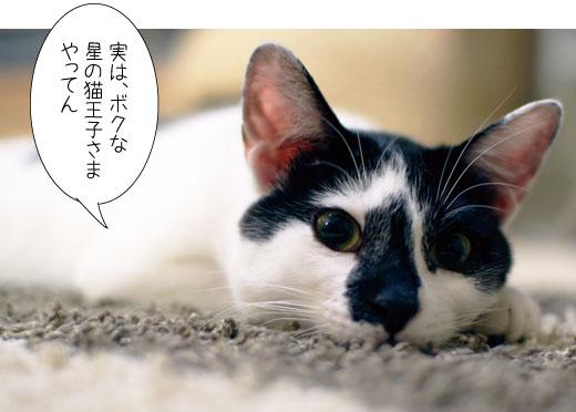 150612_ROCK_hosiouji