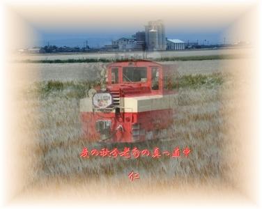 麦の秋今老旬の真っ直中