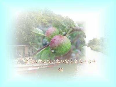 kosinku39601tuyunoyohaomoide1w.jpg