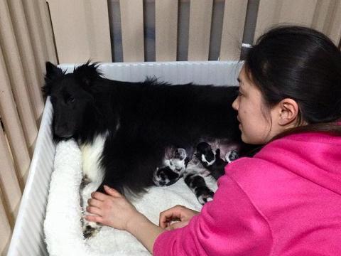 小熊ちゃん出産2