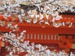 楼門の朱と桜