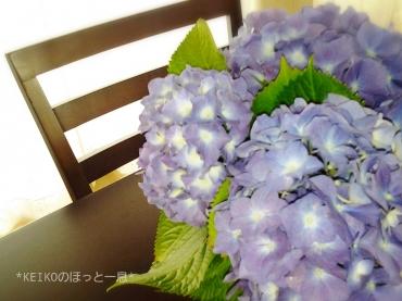 紫陽花の想い出話