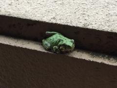 7月1日蛙
