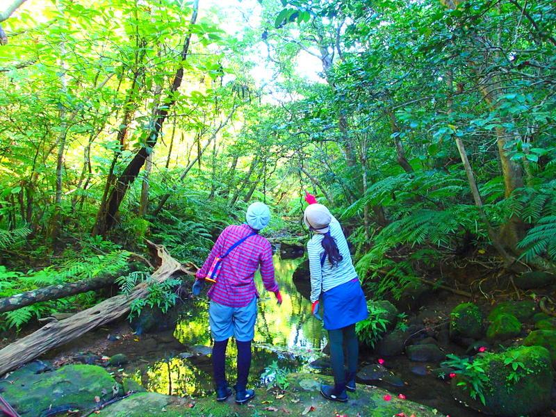 西表島・トレッキング・ken guide