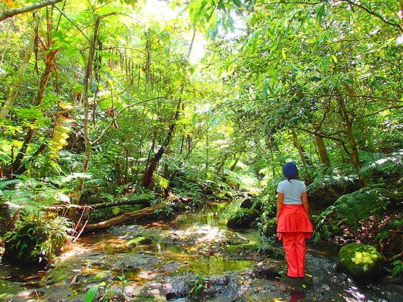 西表島旅行・ネイチャー体験ツアー・KEN GUIDE