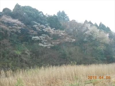 2015_0405_yatsuda_0014_R.jpg