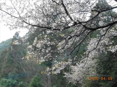 2015_0405_yatsuda_0022_R.jpg
