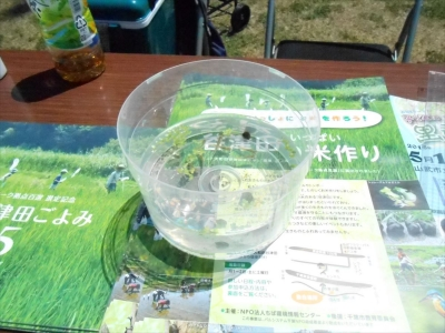 2015_0510_earthdaychiba_0004_R.jpg