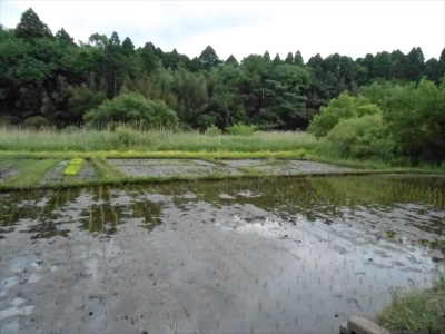 2015_0518_yatsuda_0009_R.jpg