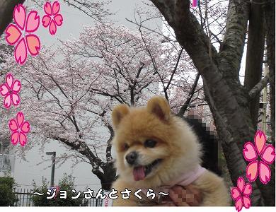 2015年花見7