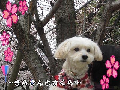 2015年花見8