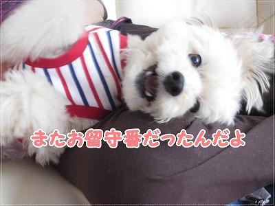 日暮里&巣鴨5